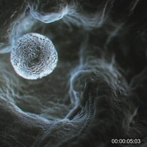 Sperm atmospheric animation